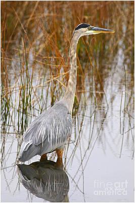 Lake Carmi Visitor Print by Deborah Benoit