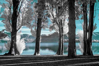 Lake Wanaka Trees  Print by Russ Dixon