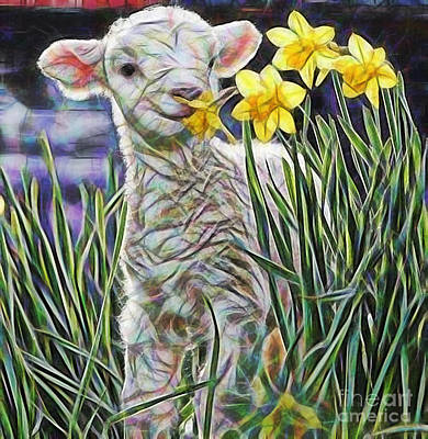 Lamb Collection Print by Marvin Blaine