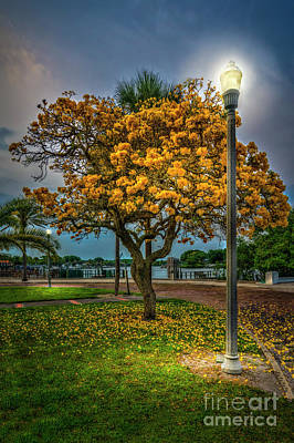 Lamp And Tree Print by Marvin Spates