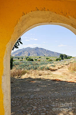 Archways Photograph - Landscape With Agave Cactus Field In Mexico by Elena Elisseeva