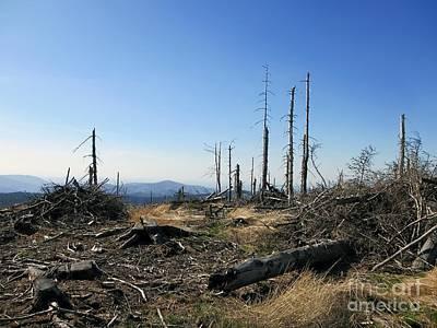 Landscape With Dead Old Trees In Poland, Beskid Slaski Near The Skrzyczne Peak Print by Unknow