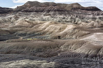 Petrified Forest Arizona Photograph - Landscape With Many Colors by Melany Sarafis