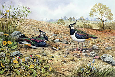 Lapwing Family With Goldfinches Print by Carl Donner