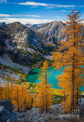 Larches At Colchuck Print by Inge Johnsson