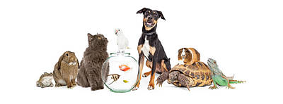 Large Group Of Pet Animals Together Print by Susan Schmitz