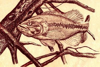 Bass Fishing Drawing - Large Mouth by Kathleen Kelly Thompson