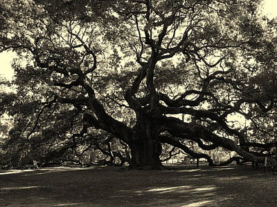 Angel Oak Photograph - Last Angel Oak 72 by Susanne Van Hulst
