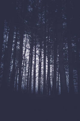Virginia Photograph - Last Light In The Forest by Shane Holsclaw