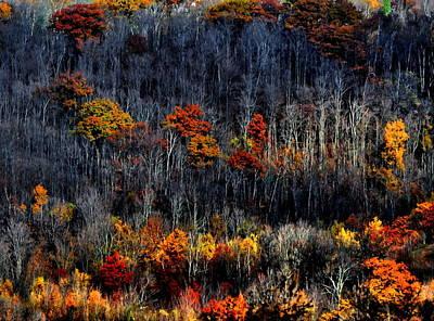 Photograph - Last Vestiges Of Autumn  by Andrea Kollo