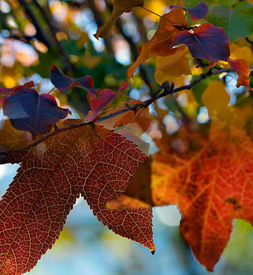 Red Leaf Digital Art - Late Autumn Colors by Stephen Anderson