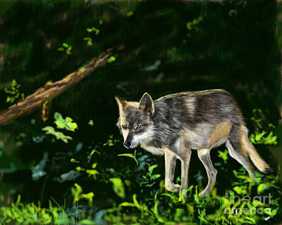 Late October Wolf Print by Barb Kirpluk