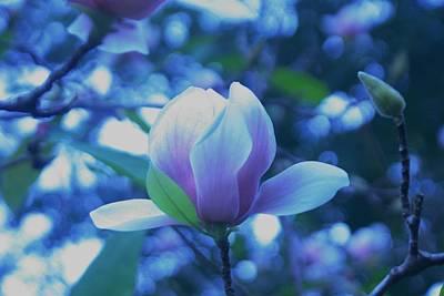 Late Summer Bloom Print by John  Glass