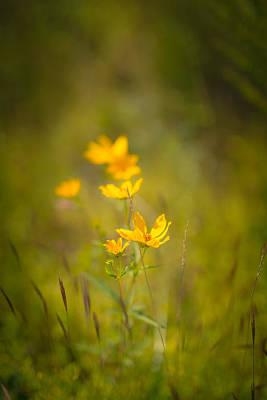 Virginia Photograph - Late Summer Gold by Shane Holsclaw