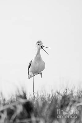Black_white Photograph - Laugh by Joe Schmied