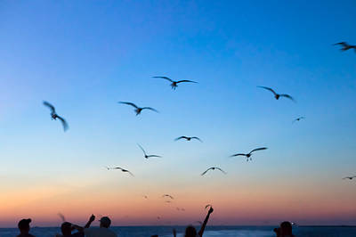 Bird Photograph - Laughing Gulls In The Evening Sky by Ellie Teramoto