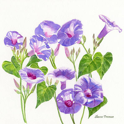 Blooming Painting - Lavender Morning Glory Flowers Square Design by Sharon Freeman