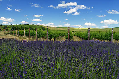 Lavender Vineyard Print by Mark Kiver