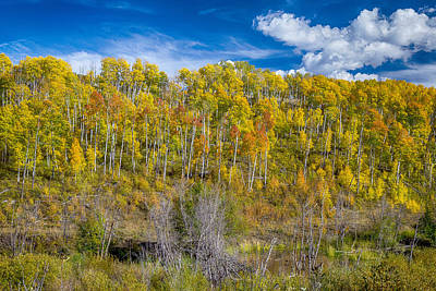 Layers Of Colors Of An Aspen Tree Forest  Print by James BO  Insogna