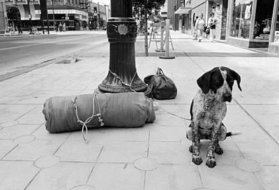 Lb Homeless Dog Original by Valerie A Kelly