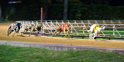 Dog Race Track Photograph - Leader Of The Pack by Keith Armstrong