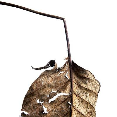Cut Out Photograph - Leaf by Bernard Jaubert
