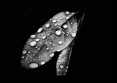 Digital Altered Photograph - Leaf It by Karen M Scovill