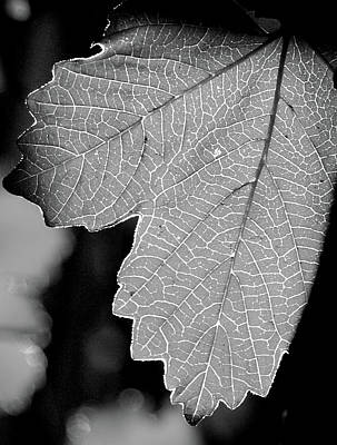 Leaf Light Black And White Print by James Granberry