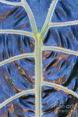 Selby Photograph - Leaf Pattern, Botanical Garden, Florida by Frans Lanting/MINT Images