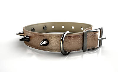 Leather Studded Collar Print by Allan Swart