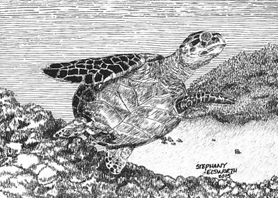 Drawing - Leatherback Turtle by Stephany Elsworth