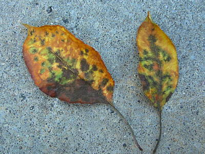 Photograph - Leaves by Gonca Yengin