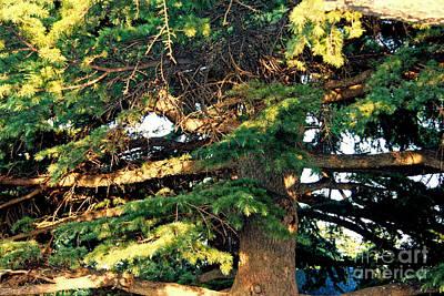 Tbilisi Photograph - Lebanese Cedar by Lali Kacharava