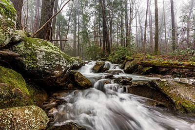 Moss Photograph - Leconte Creek by Everet Regal