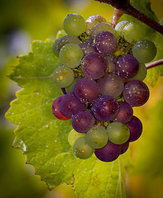 Leftover Pinot Cluster Print by Jean Noren
