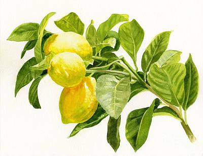 Lemon Painting - Lemons On A Branch by Sharon Freeman