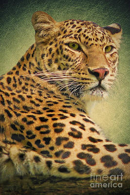 Leopard Mixed Media - Leopard by Angela Doelling AD DESIGN Photo and PhotoArt