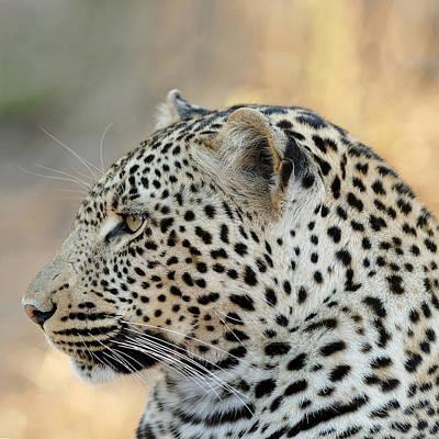 Panther Photograph - Leopard by Ellen Henneke
