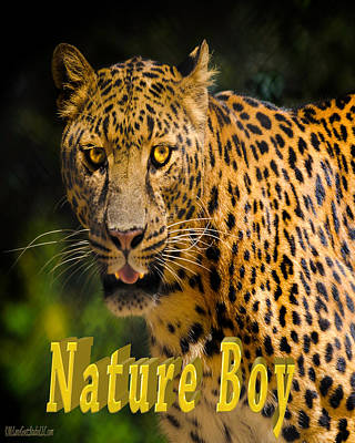 Boy Photograph - Leopard Nature Boy by LeeAnn McLaneGoetz McLaneGoetzStudioLLCcom