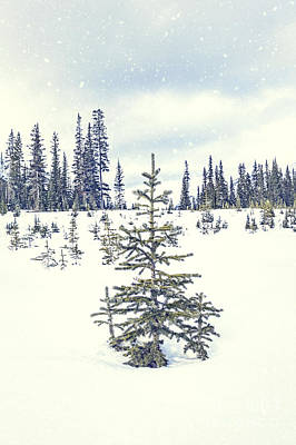 Let It Snow Print by Evelina Kremsdorf