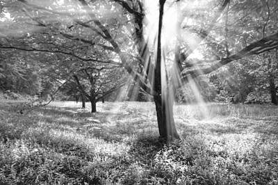 Let There Be Light Print by Debra and Dave Vanderlaan