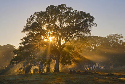 Adelaide Photograph - Let There Be Light by Mike  Dawson