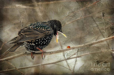Starlings Digital Art - Let's Do Lunch by Lois Bryan