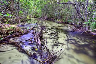 Let's Play Find The Cottonmouth Print by JC Findley