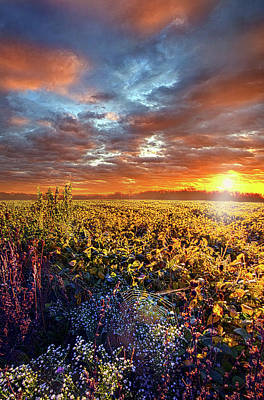 Spiderweb Photograph - Letting It Be by Phil Koch
