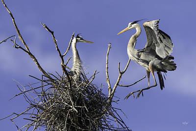 Heron Photograph - Levitation by Everet Regal