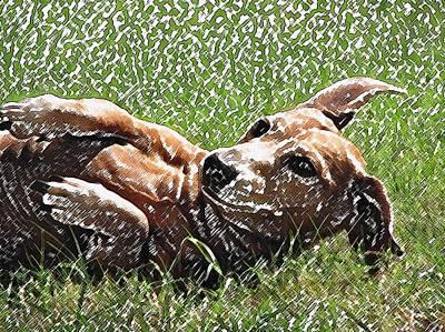 Dachshund Art Digital Art - Lexie Girl by Lisa S Baker