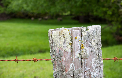 Lichen-covered Fence Photograph - Lichen Covered Fence Post by Karen Wood