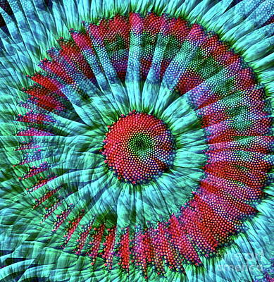 Colorful Abstract Digital Art - Life As A Daisy by Gwyn Newcombe