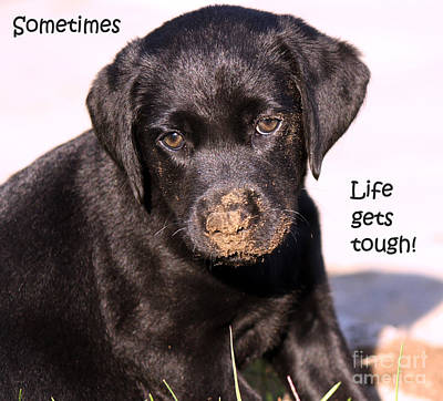 Black Labrador Puppies Photograph - Life Gets Tough by Cathy  Beharriell